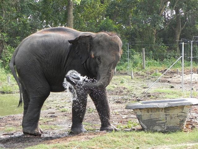 Sweetie Kali's Water Trough