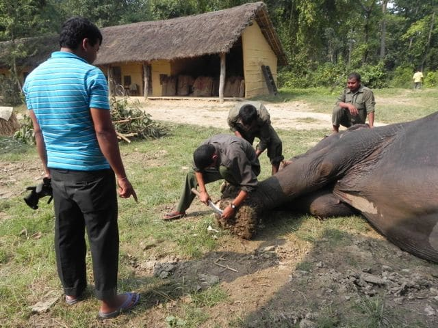 foot trimming Bardia