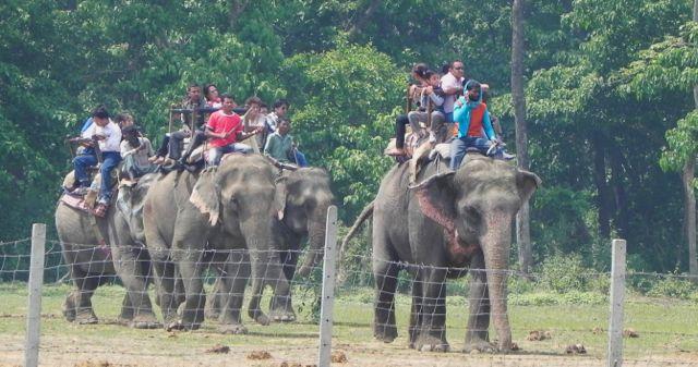 tourist safari