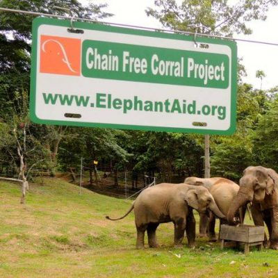 elephants enjoy life without chains