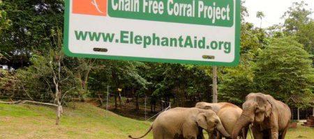 elephants enjoy life without chains