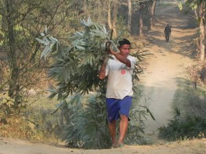 mahout carrying browse
