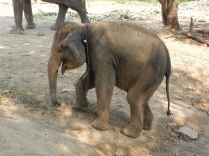 baby-with-damaged-feet-thailand2