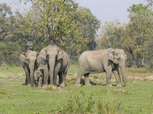 happy elephants chain free