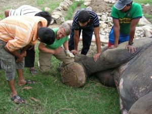 Carol Buckley shows mahouts in Nepal how to care for elephant feet