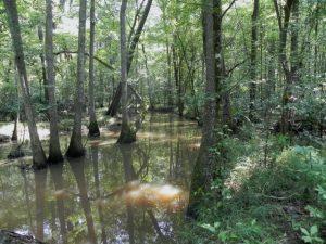 elephant sanctuary georgia streams
