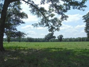 lush pastures provide elephants refuge at ERNA