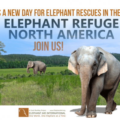 elephant sanctuary georgia at Elephant Refuge North America