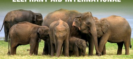 Elephant Refuge North America