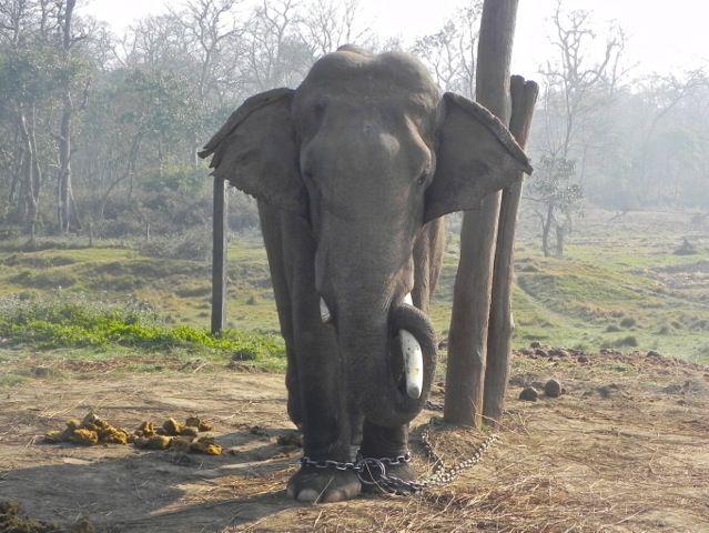 Lambodhar Prasad