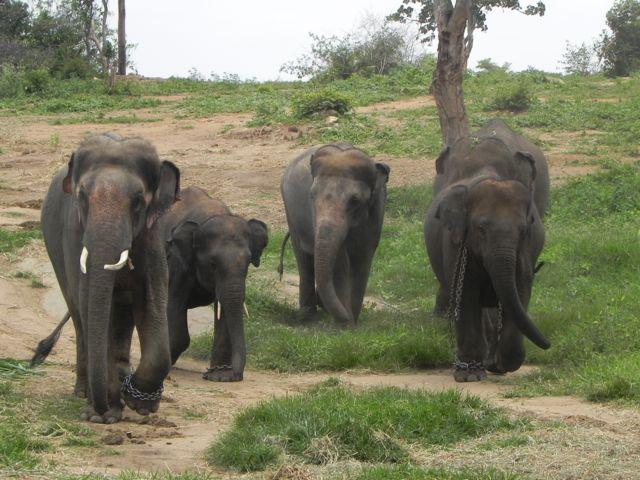 Sunder & family