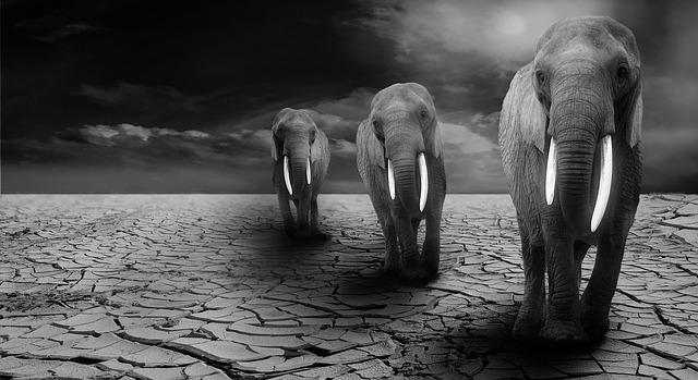 3 African elephants