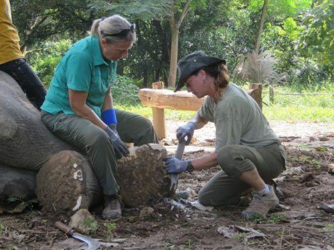 caring for elephants feet