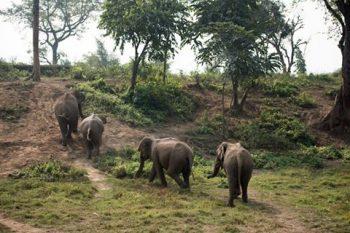 elephants at tiger tops