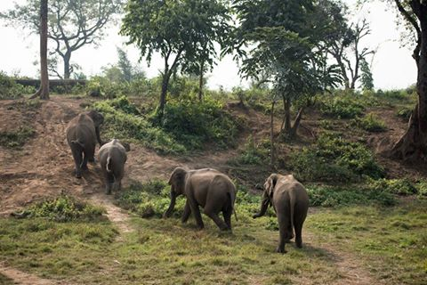 elephants at tiger tops