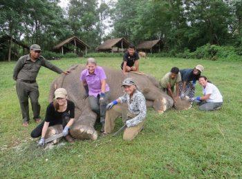 elephant foot care