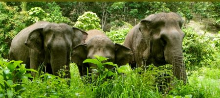 Help us finish the fence for Elephant Appreciation Day