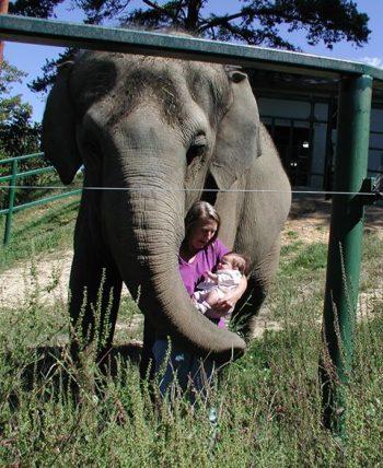 elephant tarra and brooke