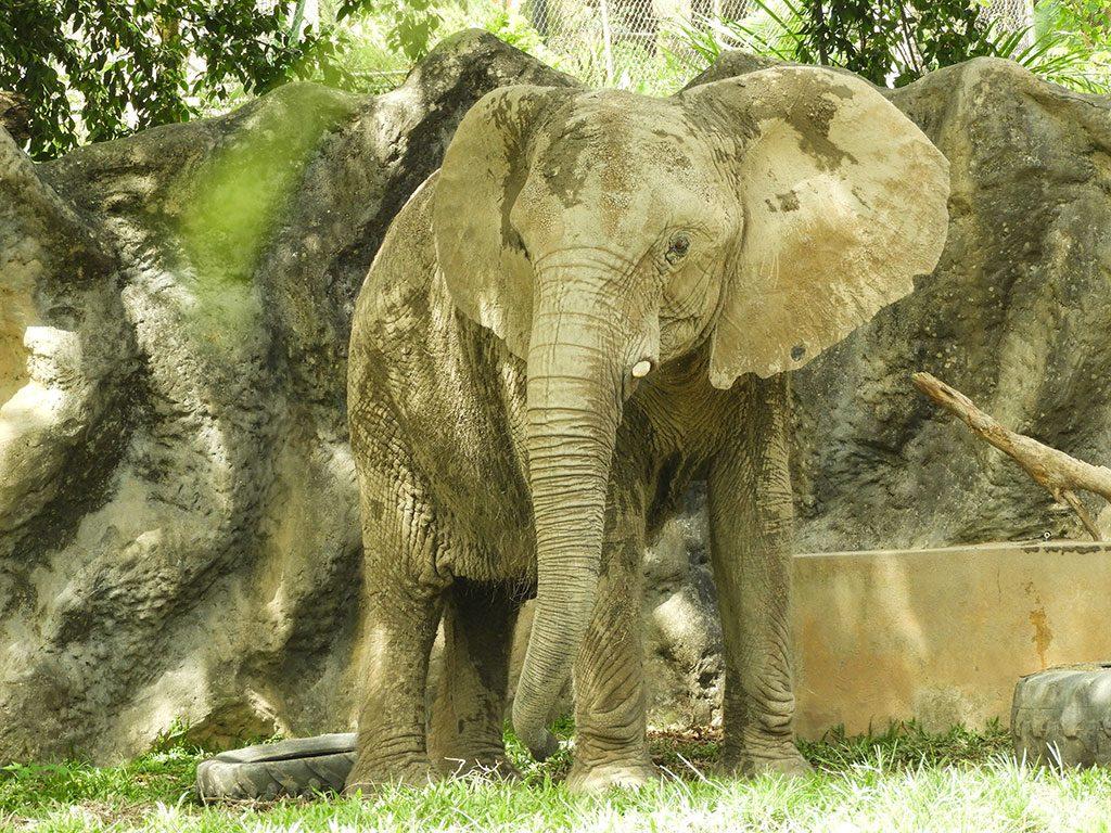 Mundi the elephant