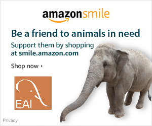 support EAI when you shop AmazonSmile