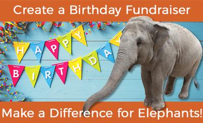 Birthday Fundraiser