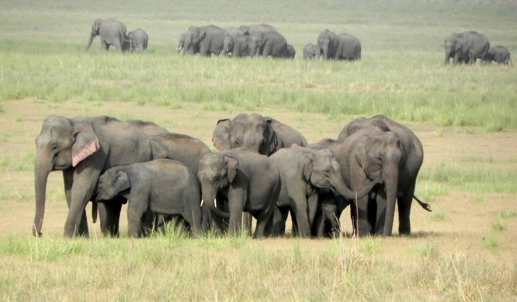 elephant groups