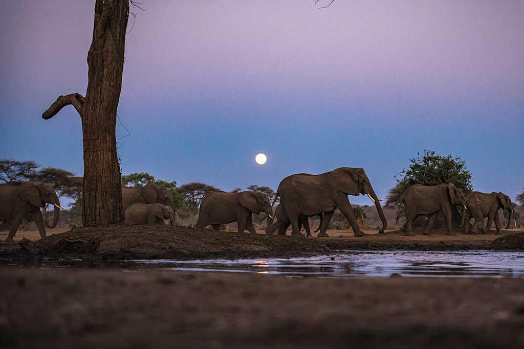 elephants moving at night