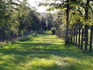 elephant fence