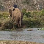 elephant exiting river
