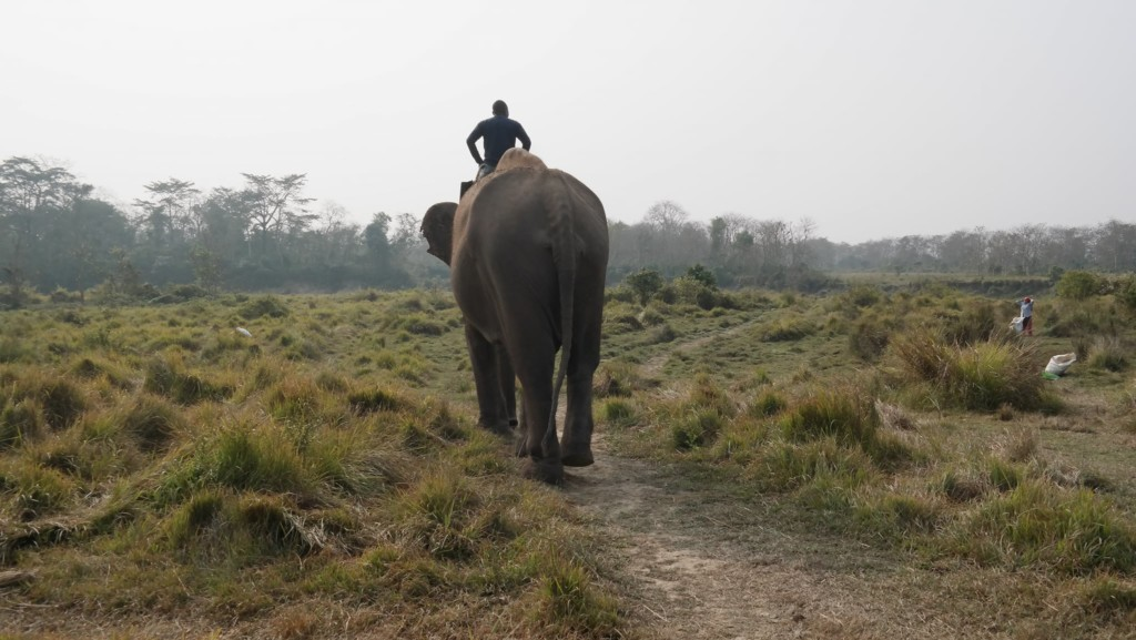 mahout riding elephant in asia