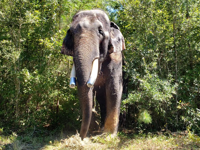 Bo exploring Elephant Refuge North America